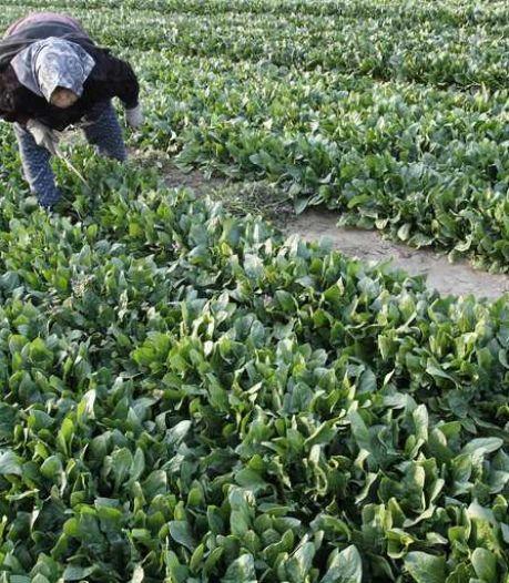 Les agriculteurs japonais risquent gros