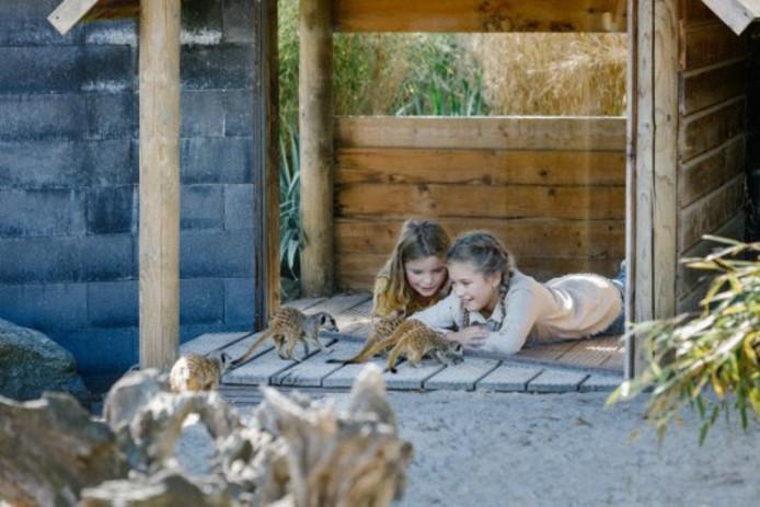 Speciaal voor de lerarenstaking: kindersafari's en werkplekken voor ouders.
