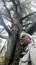 Als gevolg van gebrek aan voedingsstoffen is de kroon zo dun geworden dat je zo doorheen kunt kijken. Onder een gezonde boom zou  het vrij donker zijn.