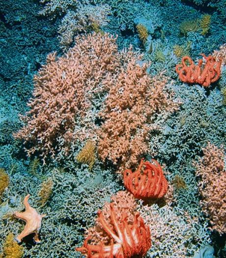 BAM onderzoekt schade koraal bij bouw pier