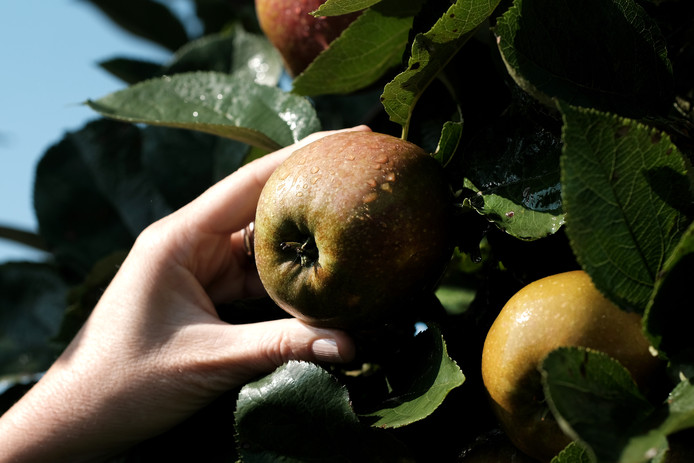 Het laatste stukje Onderdijks krijg appelstraten, zoals de Goudreinet.