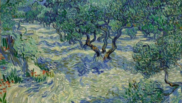 Landschap met olijfbomen door Vincent van Gogh. Beeld null