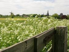 Grasland in Wijk bij Duurstede moet één grote bloemenzee worden