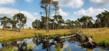 Grenspark De Zoom-Kalmthoutse Heide jaagt op nieuwe voorzitter