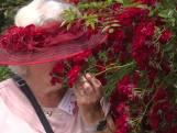 Welke roos is de mooiste? Eén groot kleurenfestijn in het Westbroekpark