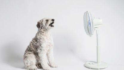Ventilatoren en aircotoestellen vliegen de deur uit