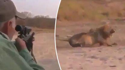 """VIDEO. Ophef over """"laffe"""" jager die slapende leeuw besluipt en doodschiet"""