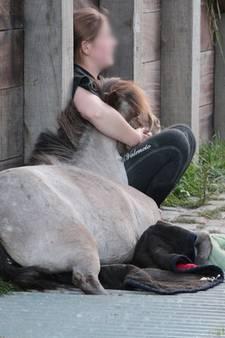 Paard met benen vast in wildrooster in Oost-Souburg