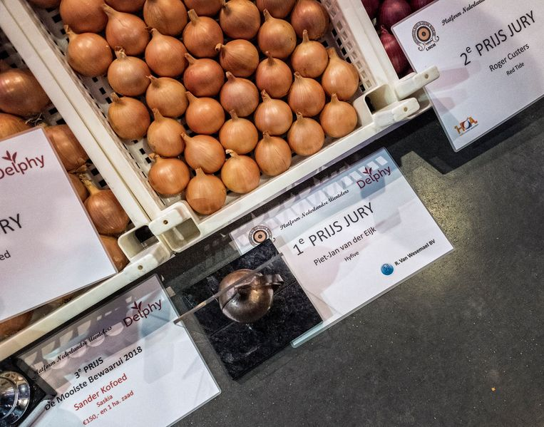 De winnende uien op een jaarlijkse wedstrijd, georganiseerd door het Platform Nederlandse Uientelers. Beeld Patrick Post