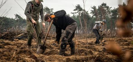 Waarom Staatsbosbeheer bomen aanplant én kapt: van plofbomen naar langetermijnbos