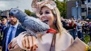 De vogel was even hard onder de indruk van de koningin als omgekeerd