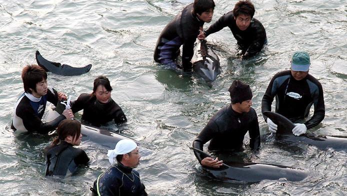 Vissers houden dolfijnen in bedwang in de baai bij Taiji op een foto uit 2007.