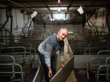 Varkensboer uit Haarle na 43 jaar failliet: 'Ik was doodmoe'