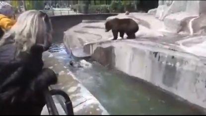 Dronken man dringt binnen in berenverblijf Poolse zoo en vecht met bruine beer