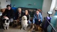 """Sara Coeckelberghs viert 2 jaar Canibou Hondenfysiotherapie: """"Ik behandel honden en katten. En zelfs een geitje"""""""