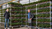 """'Bloemetje voor de zorg' wil zorgverleners hart onder de riem steken: """"Iedereen kan via site plantje kopen, wij gaan ze dan aan ziekenhuizen leveren"""""""