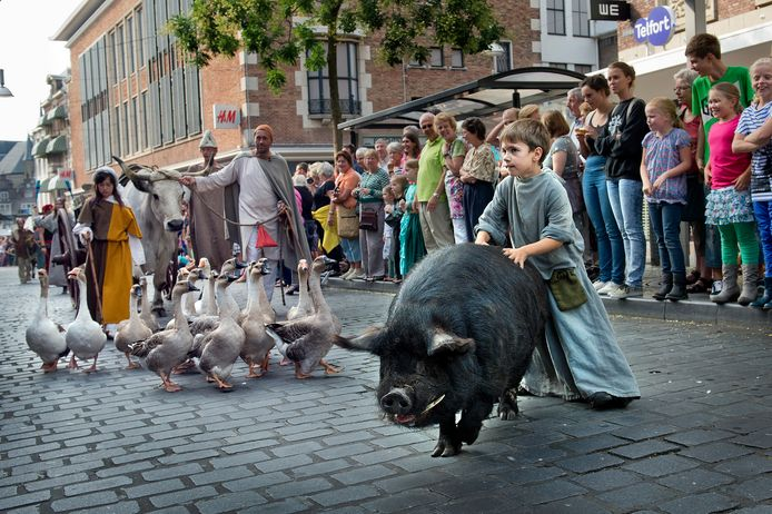 Een varken en ganzen in de Blijde Incomste, de traditionele optocht bij de afsluiting van het Gebroeders van Limburg Festival in 2013. Ook dit jaar lopen de dieren weer mee.