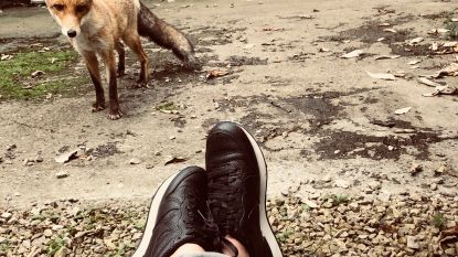 """""""Hoe aaibaar hij ook lijkt, geef een vos alstublieft geen eten"""""""