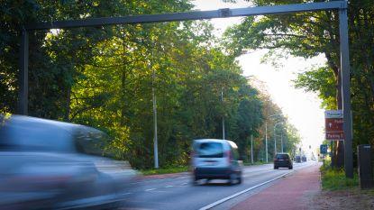 Tijdelijke verkeerslichten ter hoogte van Planckendael voor werf