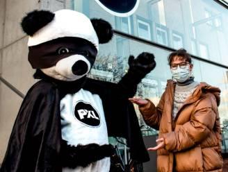 Welkom PandiX! Reuzenpanda is nieuwe PXL-mascotte
