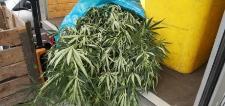 Forse stijging aantal drugsoverlastmeldingen in Zeeuws-Vlaanderen