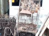 Aziaten willen af van dierenmarkten