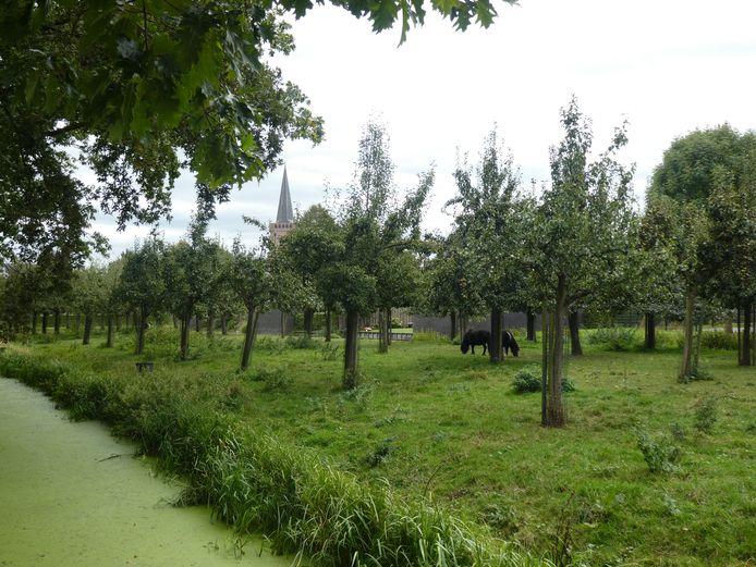 De boomgaard Engelse Hoek behoort nu, net als vroeger, weer tot buitenplaats Huis te Jaarsveld.