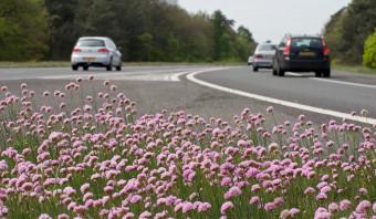 Op de middenberm van de snelweg groeien allerlei bijzondere planten