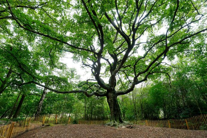 De Heksenboom in Bladel