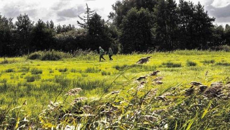 Wandelaars verkennen het Oudshoornpad, een nieuwe route van Natuurmonumenten over de weilanden van boer Bas Oudshoorn. (FOTO ROB HUIBERS) Beeld
