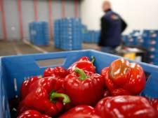 Nederland produceert drie keer meer voedsel dan we kunnen opeten: 'Er is dus méér dan genoeg'