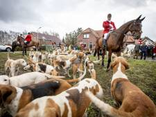Met veertig honden jagen op een vos die er helemaal niet is in Gelselaar