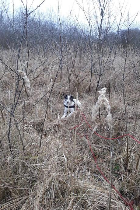 Angstig avontuur loopt goed af voor gehandicapt hondje Tanjuk