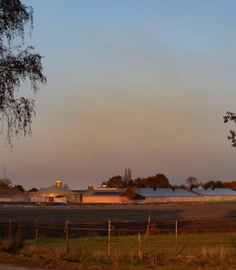 Reusel-De Mierden en Sint Anthonis: 'Ongeveer helft veehouders stopt binnenkort'