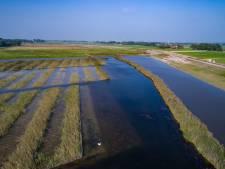Staatsbosbeheer neemt 400 hectare natuur over bij Kampen