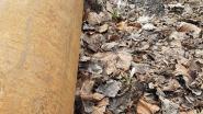 Aquafin belooft vernielde krokussen 'dodendraad' terug te planten