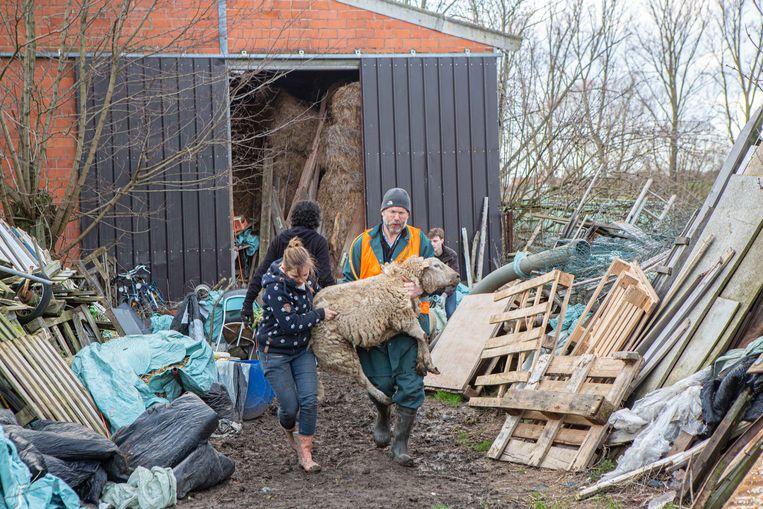 Een archiefbeeld van februari van dit jaar toen ruim 100 dieren in beslag werden genomen.