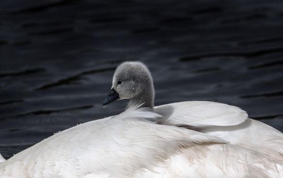Het jong zit veilig en warm.