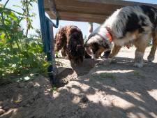 Verhuizing Alphens hondenpark lijkt nu toch nabij