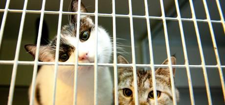 Voorzitter asiel De Kattenmand in Nieuw-Lekkerland ontslagen om wanbeheer