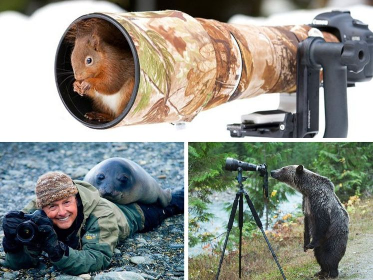 Quand les animaux sauvages interrompent les photographes animaliers