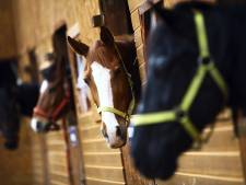 Paardenpension bij Kop van Schouwen mag 12 paarden houden