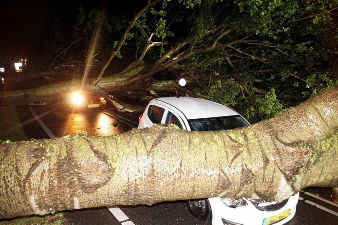 In Zwartsluis viel een boom op een rijdende auto