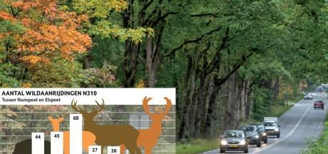 Staatsbosbeheer: na zonsondergang snelheid omlaag op wegen waar veel wild oversteekt