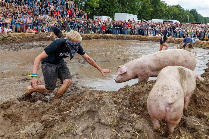 Er kwam zaterdag veel publiek kijken bij het zwientie tikken in Steenwijkerwold.