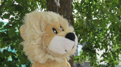 Torhoutenaars ontdekken 1.000 leeuwtjes op 11 juli