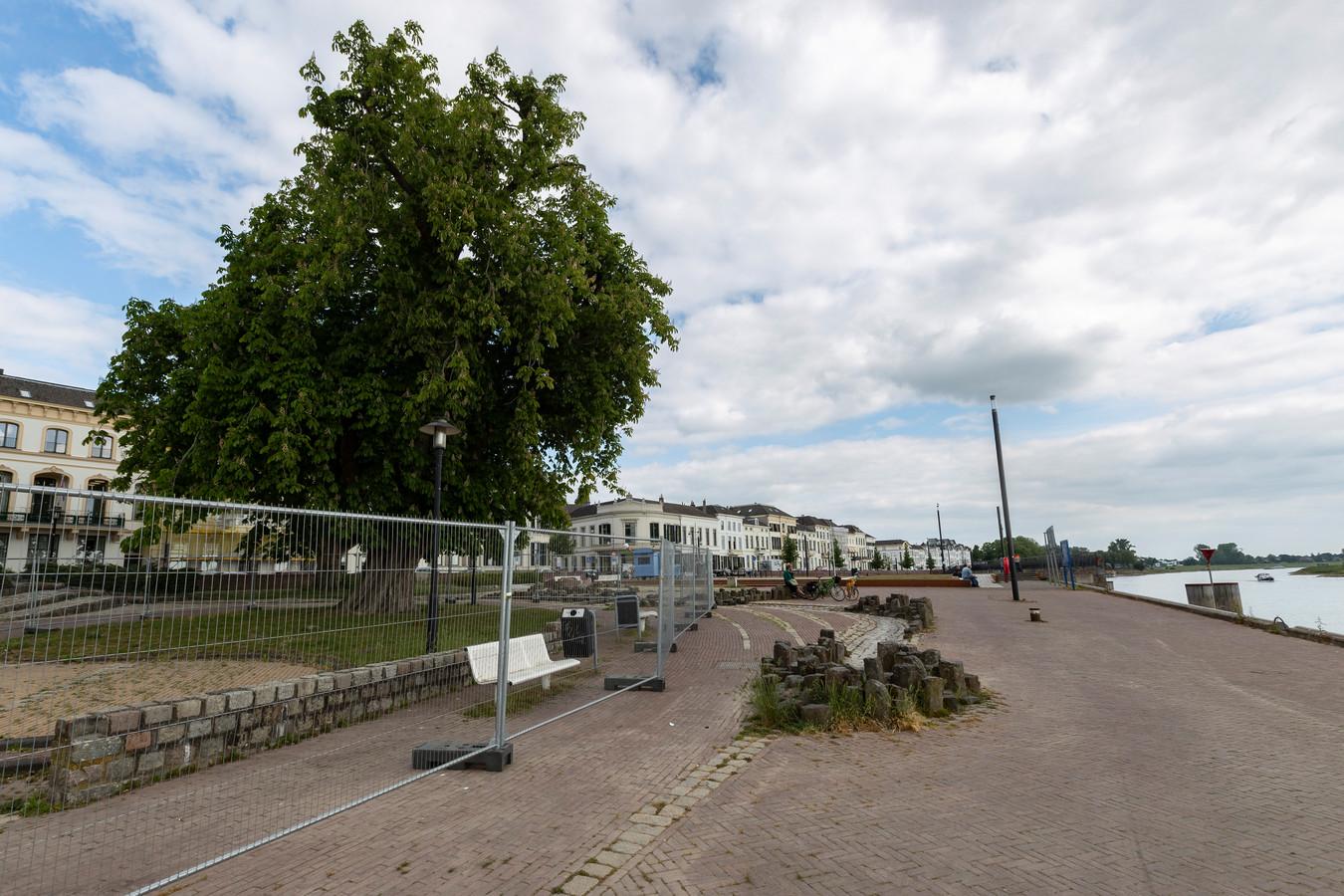 Bij het waterwerk langs de IJsselkade in Zutphen staat een joekel van een paardenkastanje. Na meer dan honderd jaar gaat de zaag erin. Grote hekken staan op dit moment onder de boom totdat hij dinsdag wordt gekapt.
