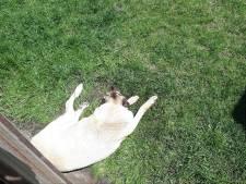 Verlamde oververhitte hond gered uit achtertuin Raamsdonksveer