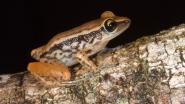 Nieuwe Rode Lijst: nu al 30.178 diersoorten met uitsterven bedreigd