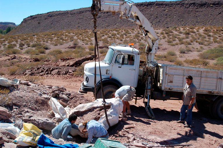 In de buurt van de volwassen Lavocatisaurus agrioensis hebben wetenschappers ook de resten van twee jongere exemplaren van 6 tot 7 meter lang gevonden.